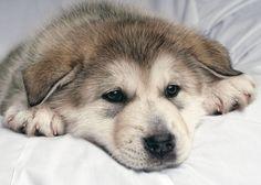 dog by Ilya Leontev on 500px
