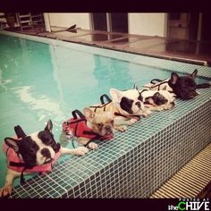 All right now boys - it's time for your swimming lesson  - attention !