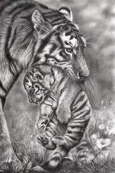 Animal pencil drawings, drawing with pencil, pencil drawing tutorials Realistic Animal Drawings, Pencil Drawings Of Animals, Animal Sketches, Cool Drawings, Drawing Animals, Pen Drawings, Tiger Drawing, Tiger Art, Tiger Sketch