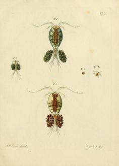 Histoire des monocles qui se trouvent aux environs de Genève / - Biodiversity Heritage Library