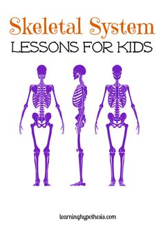 Skeletal system for kids