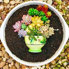 When the #succiepotinapot rage took off I made this and forgot to post it 🤦🏻♀️ This was such a fun challenge and with a whole weekend ahead of me I'm ready for another, anyone have any ideas?!? 💚💚💚💚 . #loveachallenge . #succulent #inspiration #saturday #freetime #succulentsofinstagram #inmygarden #loveachallenge #rainbowgarden #plantsinpots #suculentas #thriftysucculents