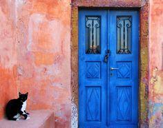 ギリシャの猫たちは、青い海を見ながら白い屋根を散歩する【画像】