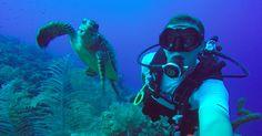 10 locais para mergulhar em Miami #viagem #miami #orlando