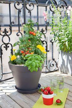 Plus de 1000 id es propos de jardini re balcon sur pinterest cultiver des tomates pots et - Tomate cerise en pot ...
