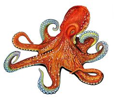 Could be lame, could be genius - I'm still deciding. Porcelain Octopus Mosaic Tile $57