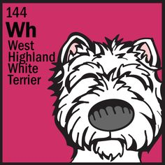 West Highland White Terrier http://thedogtable.tumblr.com/post/47450189132/the-dog-table-pooch-of-the-week-is-the-west