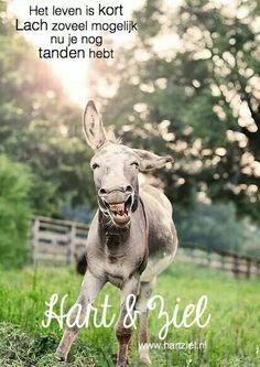 #lach #tanden #oud #lachen #citaat #quote