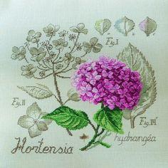 Aïda : Étude à l'Hortensia (maxi-grille) à broder au point de croix