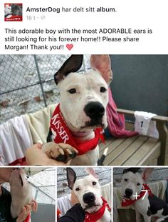 3/19/17 NO ONE WANTS CUTE WONDERWUL NYCACC SURVIVOR MORGAN! HOW CAN THAT BE? PLEASE SHARE HIM TO MAKE HIS DREAMS COME TRUE❤️ /ij🐾🐾 https://m.facebook.com/story.php?story_fbid=1768961476451205&id=188822201131815&__tn__=%2As