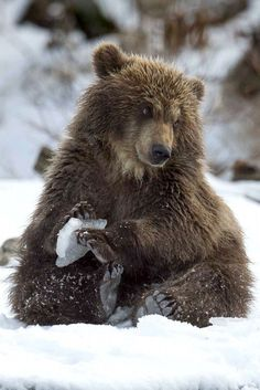 Love Bear, Cute Animals, Wild Animals, Wildlife Nature, Brown Bear, Beauty And The Beast, Animal Pictures, Creatures, Wild Life