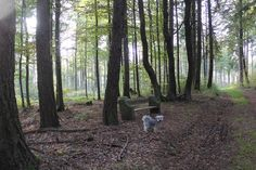 Bobby Bobby, Trunks, Plants, Resin, Seasons Of The Year, Drift Wood, Tree Trunks, Plant, Planets
