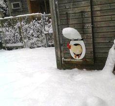 Backyard Chicken, Toilet seat as a Chicken coop door. Haha!