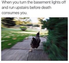 Dark basement = certain death.