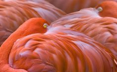 Top 20 Nature Images Through The Eyes Of National Geographic Brazil