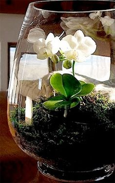 ORCHID Terrarium :: How To Make One! (Much easier to grow this way, as the vase traps the much needed humidity) :: You'll need an orchid, deep glass container, river rockers, sheet moss, sphagnum moss, deer moss, paper towels, chopsticks & orchid fertilizer.