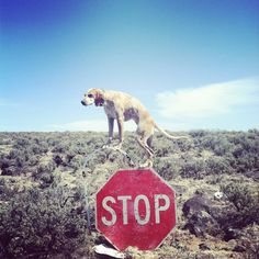 Theron Humphrey #photography #dog #outdoor