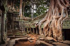 Ruiny Ta Prohm, jednej ze świątyń w kompleksie Angkor (Kambodża). Francis Hallé, 10 Tree, Photo Images, Bing Images, Tree Roots, Angkor Wat, Photos Du, Abandoned Places, Nature Photos