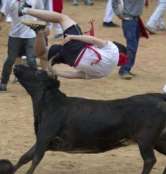 """1 of 10 In pictures: Bull running in Pamplona - 09 July an American who co-wrote a book called """"How to Survive the Running of the Bulls"""" was badly gored on Wednesday in the morning bull run at the San Fermin festival. Pamplona, Running Of The Bulls, Writing A Book, Animal Pictures, Survival, Sports, Animals, Wednesday, American"""