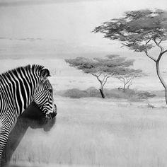 Black And White Animals Photography – Fubiz™