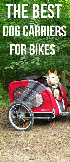 Wanna take your dog for a ride? Check these 7 amazing Dog Carriers for Bikes!