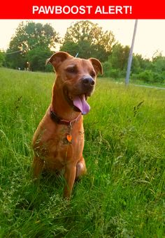 Please spread the word! Rusty was last seen in Ottawa Lake, MI 49267.  Message from Owner: MISSING DOG his name is rusty. He's a pit mix mutt. Tan. About 50 lbs. Is friendly but was abused before I got him and might be timid. Went missing around 7:30pm 6-18-2017 in Sylvania Ohio right by the Michigan Ohio line on Whiteford and old stateline road. My phone number is on his tags 419-787-3877. He is dearly missed and needs to come home  Nearest Address: Near Huntington St and old state line…