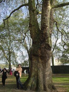 tree? what tree?