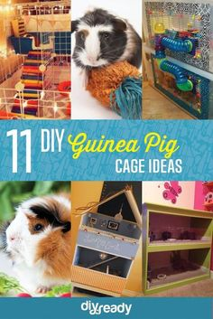 11 DIY Guinea Pig Cage Ideas | Fun And Gorgeous Guinea Pig Cage by DIY Ready at http://diyready.com/diy-guinea-pig-cage-ideas/