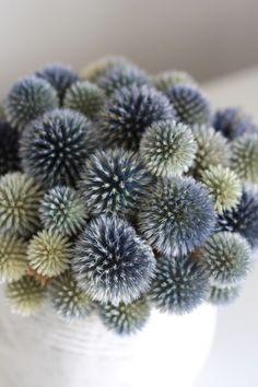 beauti textur, colour, idea, echinop dri, grey flower