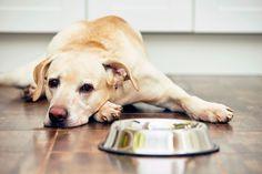 Ο σκύλος σου δεν σ' εμπιστεύεται όταν έχεις νεύρα! - http://ipop.gr/themata/eimai/o-skylos-sou-den-s-ebistevete-otan-echis-nevra/