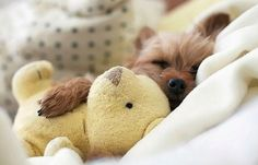 20 Puppies Cuddling With Their Stuffed Animals During Nap Time, oh my gosh this is adorable...