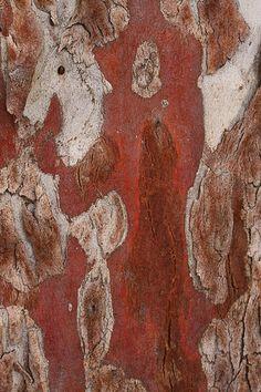 Eucalyptus bark abstract 2 by kasia-aus, via Flickr