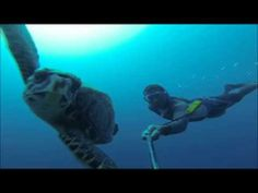 Roatan Diving 70 ft With a Turtle Without A Tank!! Amazing HD Video!!