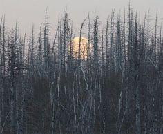 Мы как всегда одни приходим в лес. Мы им живём. Лес снится нам обоим. В моём лесу есть столько разных мест, где можешь ты остаться,  где можешь быть собою.  © Виталий Сергеев