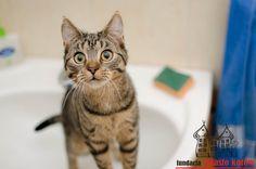 Maja #cute #cutecats #cats #caturday #kot #koty #neko #gato #katz #katzen #kittens #chat