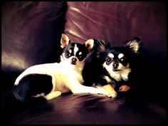 My dogs<3