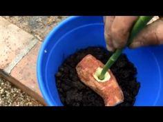 Rosa por Estaquia com Batata - Como fazer - YouTube
