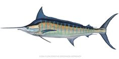 Blue Marlin Painting - Blue Marlin by Flick Ford Beach Design, Fish Design, Fish Artwork, Ocean Paintings, Painting Art, Fish Drawings, Skateboard Design, Nautical Art, Surf City