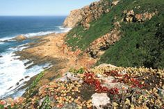 Robberg Nature Reserve in Plettenberg Bay, Garden Route. Just outside Plettenberg Bay on the Garden Route is a beautiful, remote rocky peninsula . Sea Diving, Sea Spray, The Mountains Are Calling, Game Reserve, Lush Garden, My Land, Nature Reserve, West Coast, South Africa