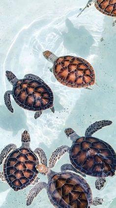 Sea Turtle Aesthetic