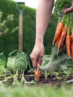 Grow your own food. Plant and raise your own vegetables. PS. Gardening is cheaper than therapy and you get tomatoes.