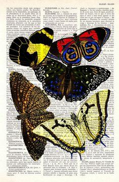 Butterflies Dictionary Book Print
