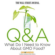 Today GMOs make up more than 90% of the corn, soybean, cotton, sugar beet and canola grown in the U.S, and the Grocery Manufacturers Association, which represents big food companies, estimates GMOs are in about 80% of packaged foods. Here are a few things worth knowing about GMOs: http://blogs.wsj.com/corporate-intelligence/2014/08/07/qa-what-do-i-need-to-know-about-gmo-food #food #GMOs #labelGMOs #righttoknow The Wall Street Journal GMO Inside