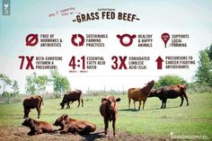 Why choose grass-fed beef over the cheap stuff in the grocery store? Here are just a few of the many benefits of healthy, sustainably-raised meat.