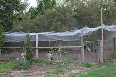 Plants to grow for the chickens to eat