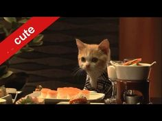 Cats are travelling. A Japanese commercial. SO CUTE!!!!