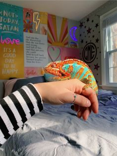 Chameleon, 2 years, M Les Reptiles, Cute Reptiles, Reptiles And Amphibians, Cute Creatures, Beautiful Creatures, Animals Beautiful, Chameleon Pet, Terrarium Reptile, Cute Little Animals