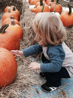 Pumpkins at the Pumpkin Patch!!! At Lafreniere Park, in Metairie!