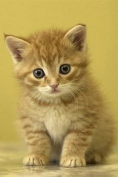 All I want for christmas is Youuuu kitty
