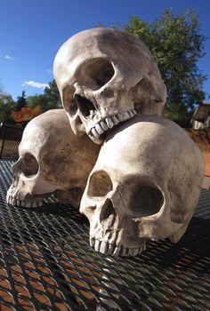 ☆ Human Skull Decorations :¦: Etsy Shop: DragonBoneBasement ☆